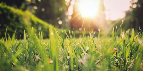 A picture of grass