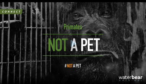 Not a Pet: Primates