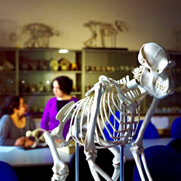 Animal skeleton in the Department of Anthropology