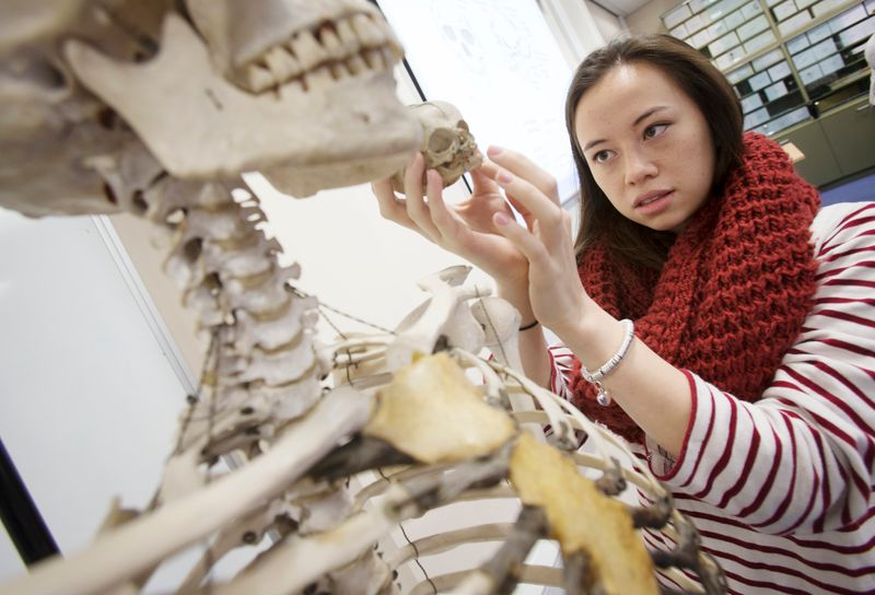 Student holding a small skull against a larger skull