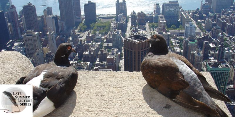 Two pigeons sit on a skyscraper looking out over New York city