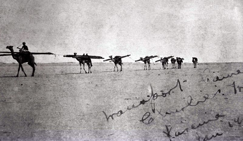 Image of camels and a driver transporting telegraph poles across an empty desert in Sudan, 1915