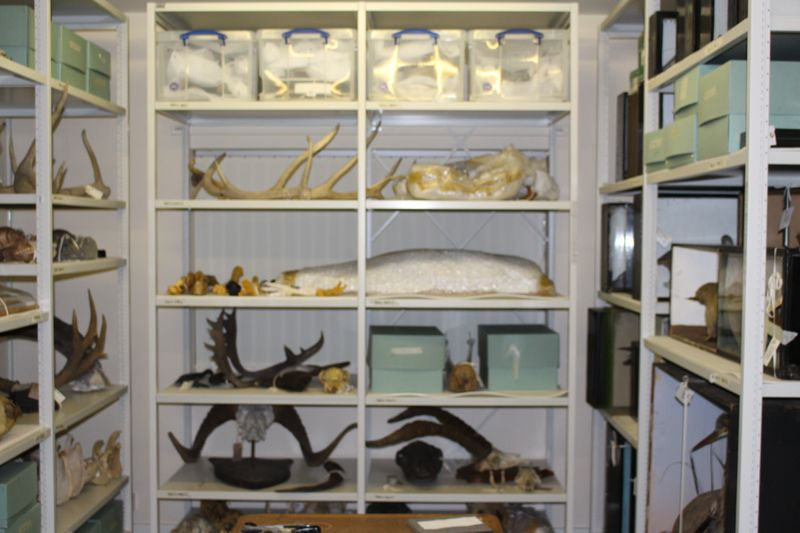 mammalian skeletal material, trophy head taxidermy, zoological taxidermy, birds' eggs, a spirit collection and plant and seed material.