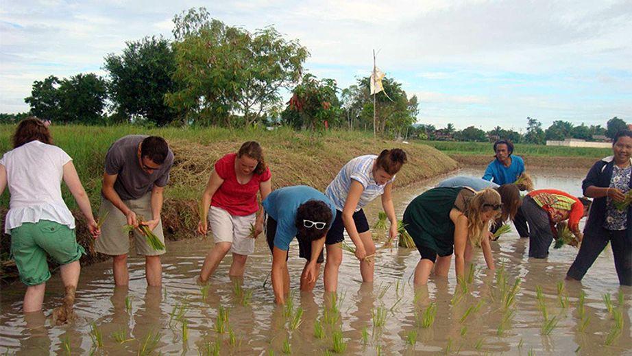 Thailand Field Trip 2011 students transplanting rice