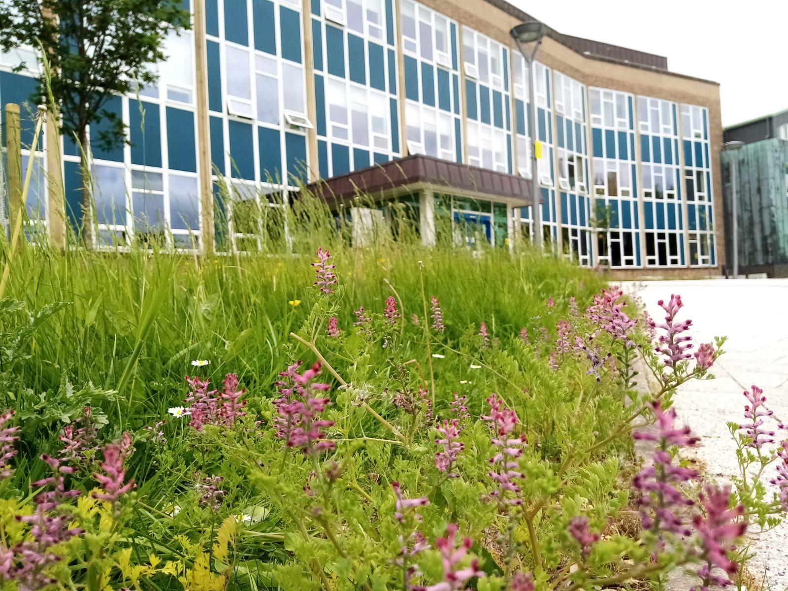 Rochester building with Wildflower meadow in front
